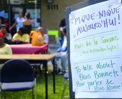Pique-nique pour Blue Bonnets / Picnic for Blue Bonnets